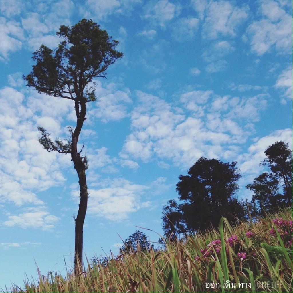 ทุ่งหญ้าสลับต้นไม้ใหญ่ประปราย