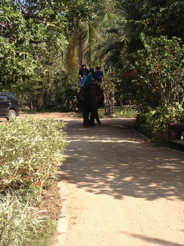 แคมป์ช้าง ลุงน้อย-เดิน