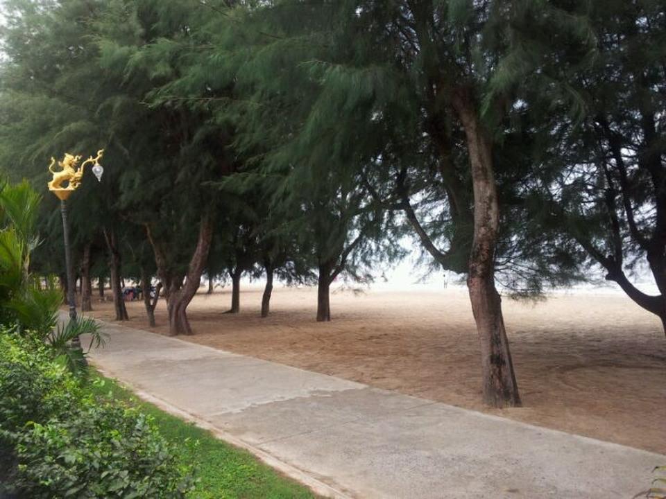 หาดแหลมสิงห์-ทิวสน