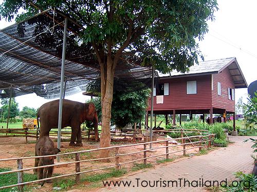 10 ที่ท่องเที่ยวสุดประทับใจในสุรินทร์-หมู่บ้านช้างบ้านตากลาง