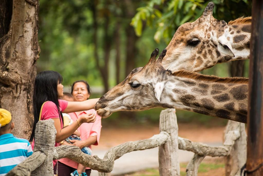 10 ที่เที่ยวสุดฮิตในจังหวัดนครราชสีมา-สวนสัตว์นครราชสีมา