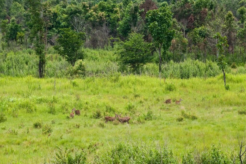 10 ที่เที่ยวเเสนงามของกาญจนบุรี-เขตรักษาพันธุ์สัตว์ป่าทุ่งใหญ่นเรศวร