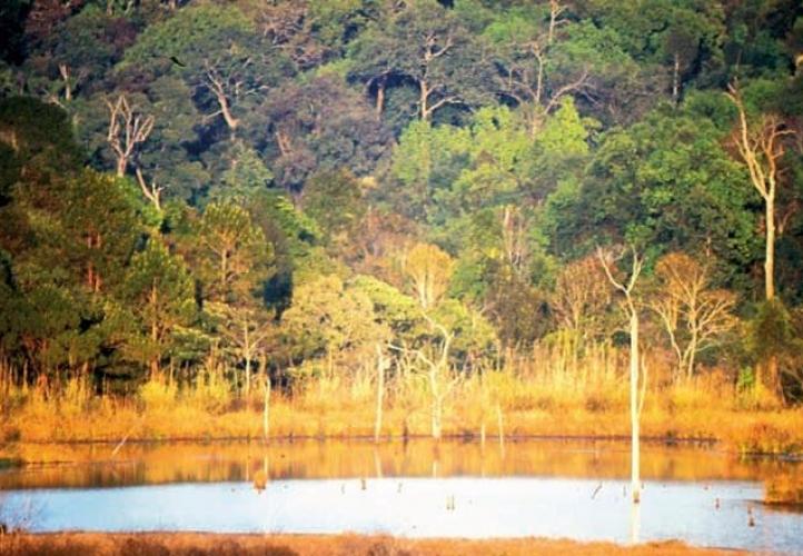 10 เเหล่งท่องเที่ยวน่าชมของจังหวัดชัยภูมิ-เขตรักษาพันธุ์สัตว์ป่าภูเขียว